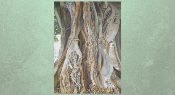 Ficus y raíces ini